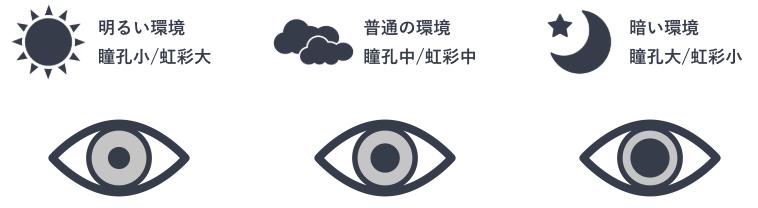 照度条件による瞳孔/虹彩径の変化