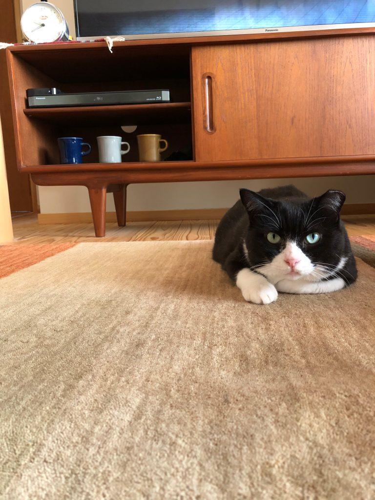 中村家の愛猫かみ