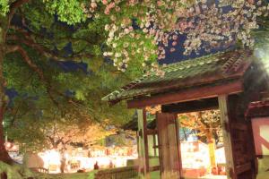 亀城公園夜桜