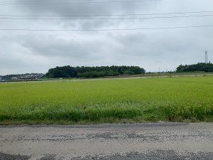 店舗前の畑
